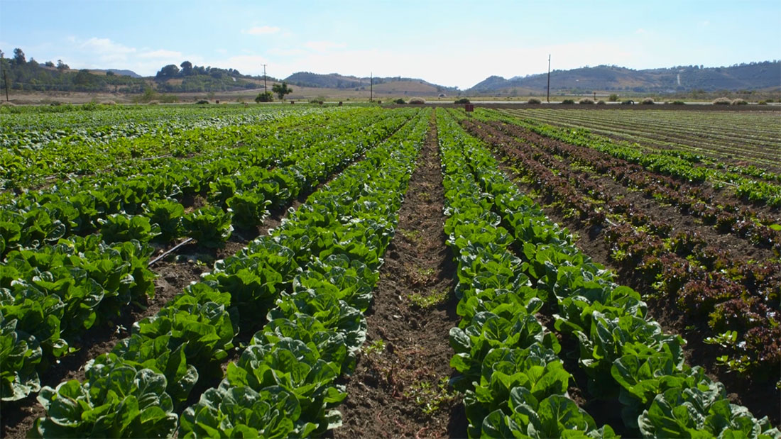 farm field lettuce kickstarter video california los angeles