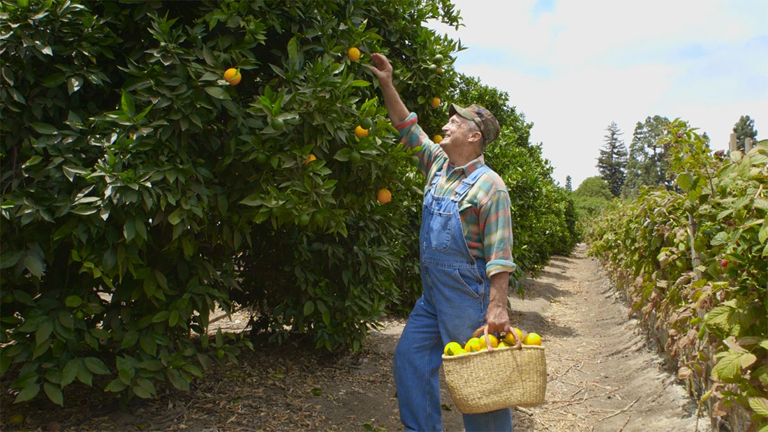 video production still of california farmer picking oranges